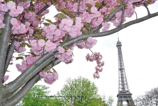Spring Paris Restaurant Review