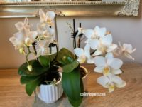 Image of our orchids weekly watering with Lulu Anna from Lulu Dans Ma Rue