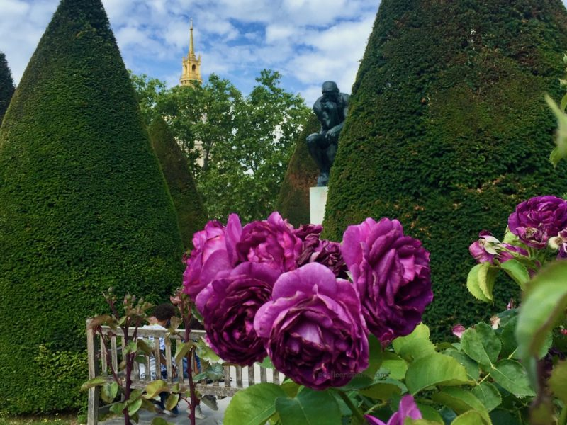 image of rose in the Musée Rodin garden and Rodin's Thinker